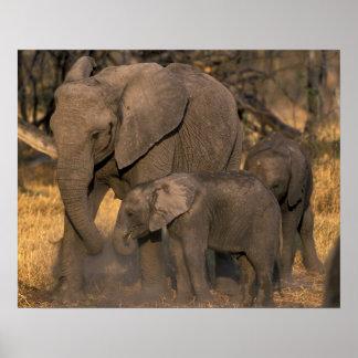 Botswana, Moremi Game Reserve, Elephant herd Poster