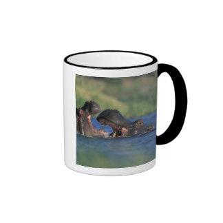Botswana, Moremi Game Reserve, Hippopotami Ringer Mug