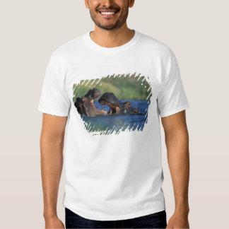 Botswana, Moremi Game Reserve, Hippopotami T Shirts