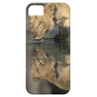 Botswana, Moremi Game Reserve, Lioness (Panthera iPhone 5 Covers