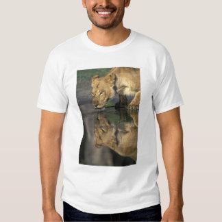 Botswana, Moremi Game Reserve, Lioness (Panthera Tees