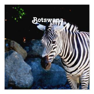 "Botswana Zebra 5.25"" Square Invitation Card"