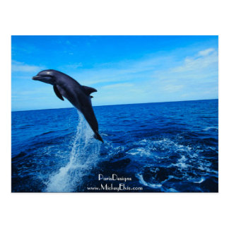 Bottle nose dolphin postcard