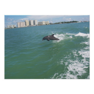 bottle nose dolphin taking a free ride poster