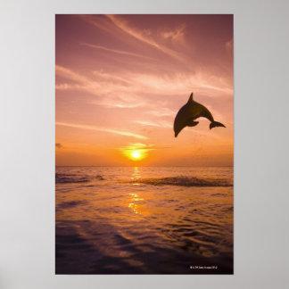 Bottlenose Dolphin jumping Poster
