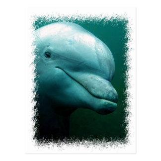 Bottlenose Dolphin Postcard