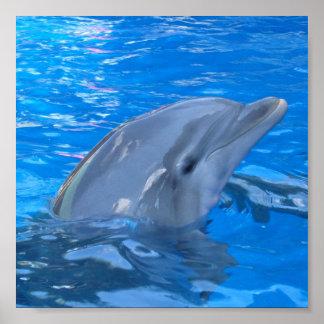 Bottlenose Dolphin Print