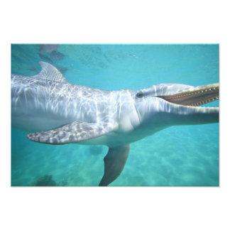 Bottlenose Dolphin Tursiops truncatus), 2 Art Photo