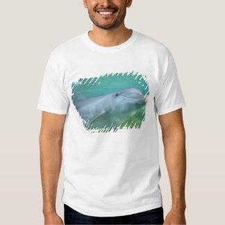 Bottlenose Dolphin Tursiops truncatus), Tshirt