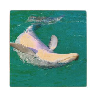 Bottlenose Dolphin Upside Down Maple Wood Coaster