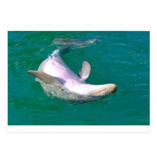 Bottlenose Dolphin Upside Down Postcard