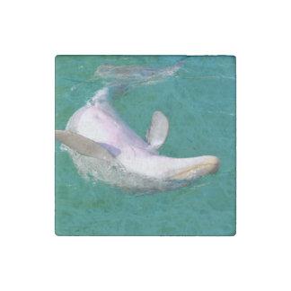 Bottlenose Dolphin Upside Down Stone Magnet