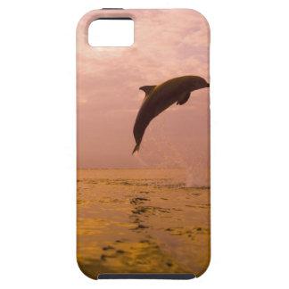 Bottlenose Dolphins (Tursiops truncatus) 2 iPhone 5 Covers