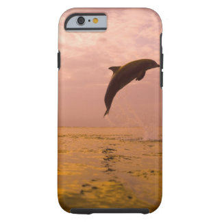 Bottlenose Dolphins (Tursiops truncatus) 2 Tough iPhone 6 Case