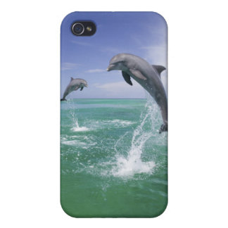 Bottlenose Dolphins Tursiops truncatus) 4 iPhone 4 Covers
