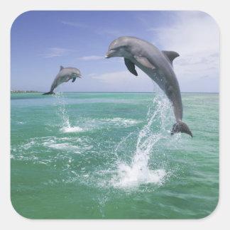 Bottlenose Dolphins Tursiops truncatus) 4 Square Sticker