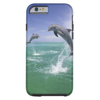 Bottlenose Dolphins Tursiops truncatus) 4 Tough iPhone 6 Case
