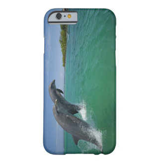 Bottlenose Dolphins (Tursiops truncatus) Barely There iPhone 6 Case