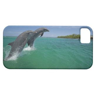Bottlenose Dolphins (Tursiops truncatus) Case For The iPhone 5