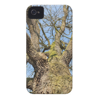Bottom view oak tree without leaves in winter iPhone 4 Case-Mate cases