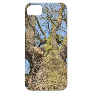 Bottom view oak tree without leaves in winter iPhone 5 case