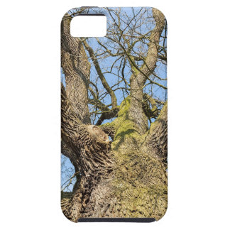 Bottom view oak tree without leaves in winter iPhone 5 covers