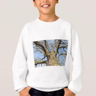 Bottom view oak tree without leaves in winter sweatshirt