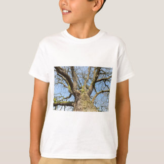 Bottom view oak tree without leaves in winter T-Shirt