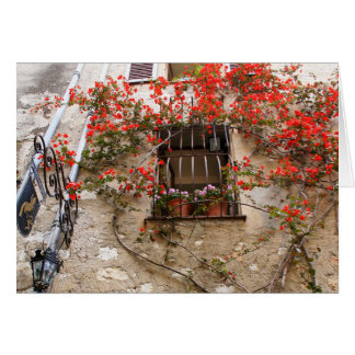 Bougainvillea at Window Card