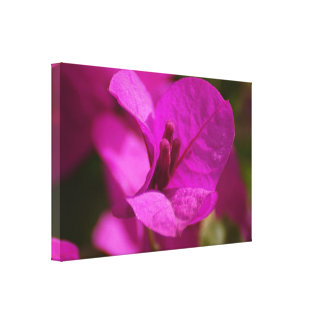 Bougainvillea Beauty Stretch Canvas Print