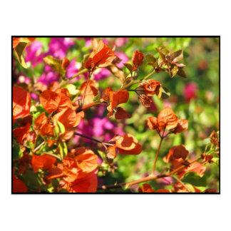 Bougainvillea Branches Postcard