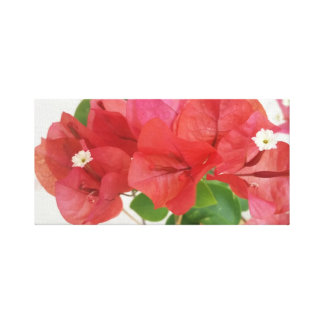 Bougainvillea Flowers Canvas Print