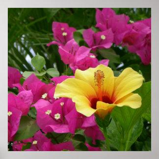 Bougainvillea & Hibiscus Poster