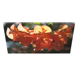 Bougainvillea (Peach Closeup) Canvas Print