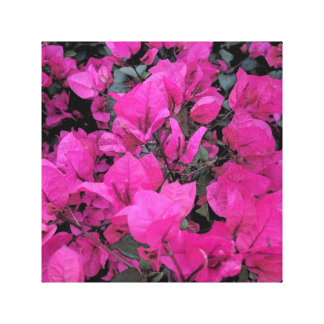 Bougainvillea Wrapped Canvas