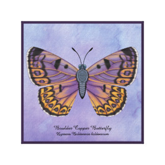 Boulder Copper Butterfly Canvas Print