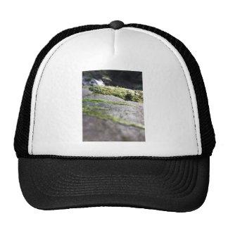 Boulder Lichen Cap