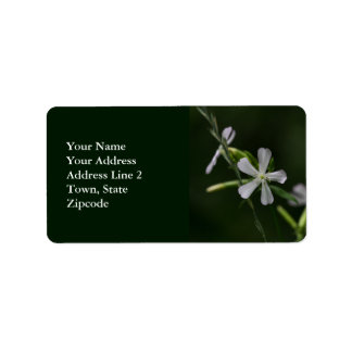 Bouncing Bet White Wildflowers Address Labels