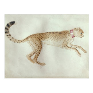 Bounding cheetah with a red collar postcard