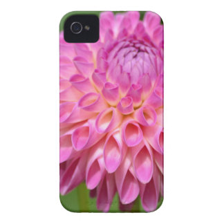 Bountiful Pink Dahlia and Bud Poster Case-Mate iPhone 4 Cases