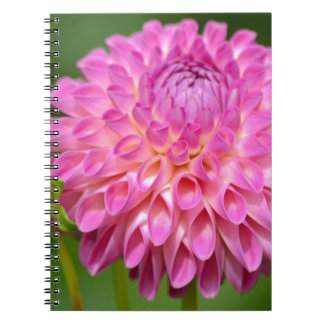 Bountiful Pink Dahlia and Bud Poster Spiral Notebook
