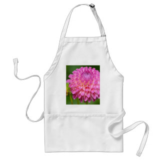 Bountiful Pink Dahlia and Bud Poster Standard Apron