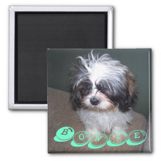 Bowie the Fuzzy Shih Tzu Puppy Dog Magnet