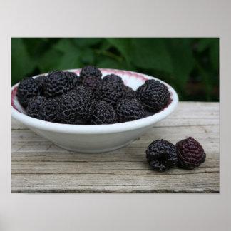 Bowl of Garden Fresh Black Raspberries Poster