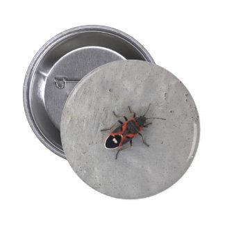 Box Elder Beetle 6 Cm Round Badge
