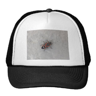Box Elder Beetle Cap