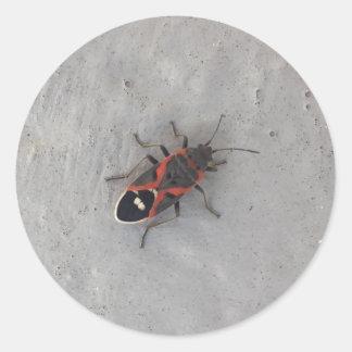 Box Elder Beetle Classic Round Sticker