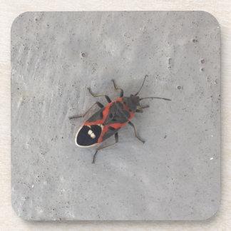 Box Elder Beetle Coaster