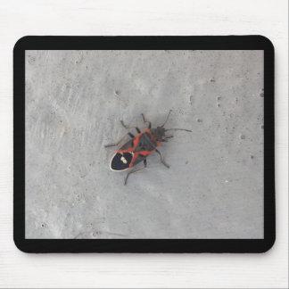 Box Elder Beetle Mouse Pad