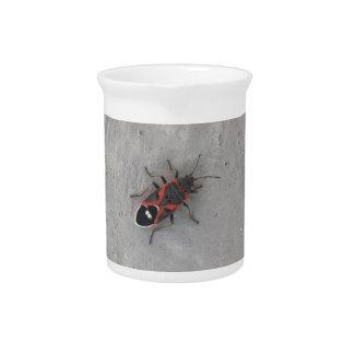 Box Elder Beetle Pitcher